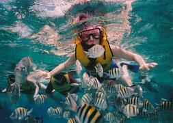 reef-snorkeling-377390__180