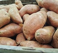 sweet-potatoes-1310287__180