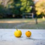 citrus-fruits-648317__340