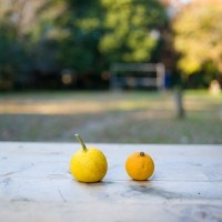 citrus-fruits-648317__340