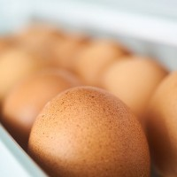 egg-2728995__480