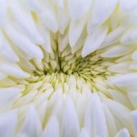 flowers-1771755__480