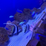 浜名湖体験学習施設ウォット ミニ水族館が楽しい!行った感想を口コミ